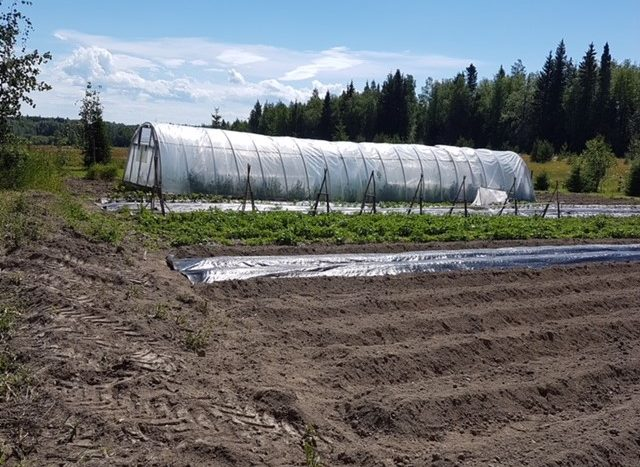 28710 Chief Lake Rd outdoor field greenhouse